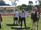 Gatton Heavy Horse Field Days 2010